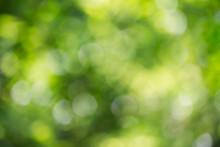 Nature Green Bokeh Background