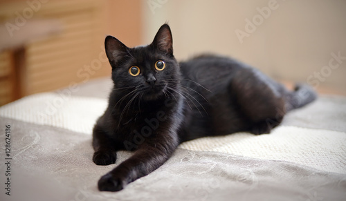 Black cat with yellow eyes lies on a sofa. Fototapet