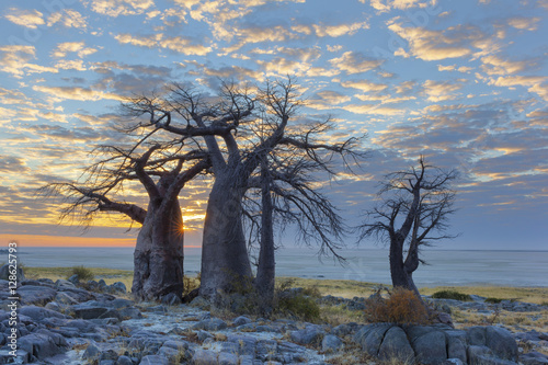 Baobab trees and clouds
