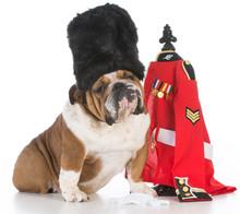 Dog Dressed Like Royal British...
