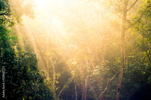 Rays of sunlight with trees Wallpaper Mural