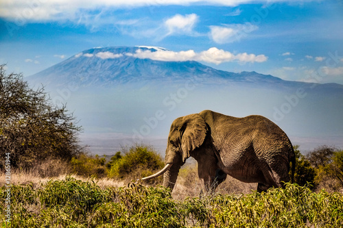Fotografie, Obraz  Elephants around a watering hole in Amboseli National Park, Kenya, October 2016