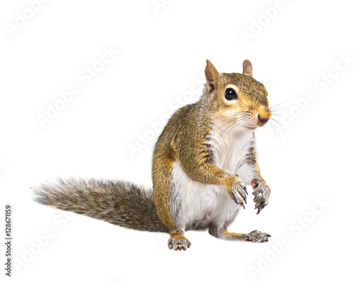 Photo sur Toile Squirrel Young squirrel seeds