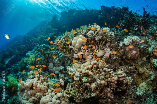 Staande foto Koraalriffen Tropical fishes