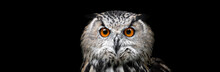 Portrait Of A Beautiful Owl. O...