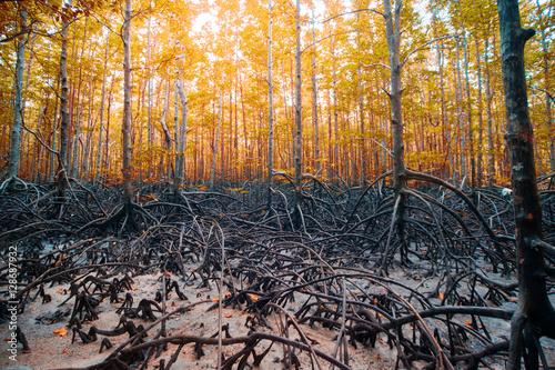 las-zachod-jesien