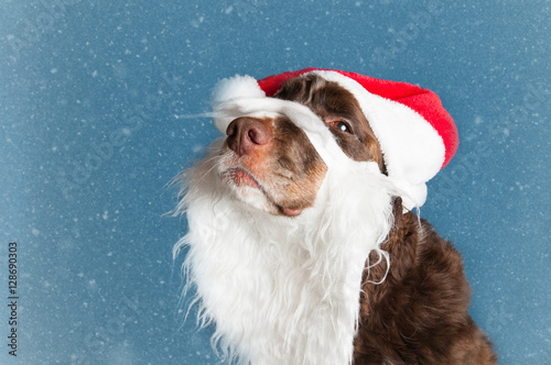 3985d1b110157 cute dog dressed in a santa hat and beard - Buy this stock photo and ...