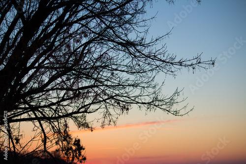 Fototapety, obrazy: Tree at dawn