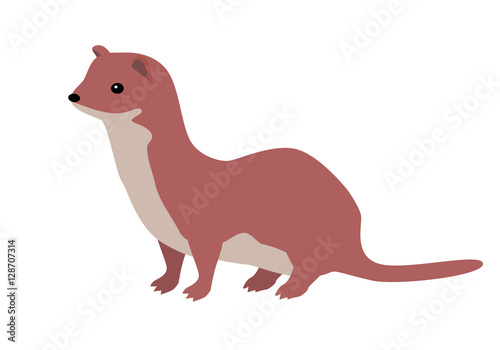 Foto  Ermine or Weasel Vector Flat Design Illustration
