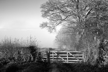 Monochrome English Landscape With A Wooden Field Gate By Woodland Trees On A Frosty, Misty Morning On The Yorkshire Wolds In Autumn Or Fall.