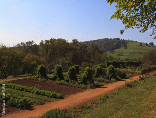 Fotografie, Obraz  Vegetable Garden at Monticello, Thomas Jefferson's home
