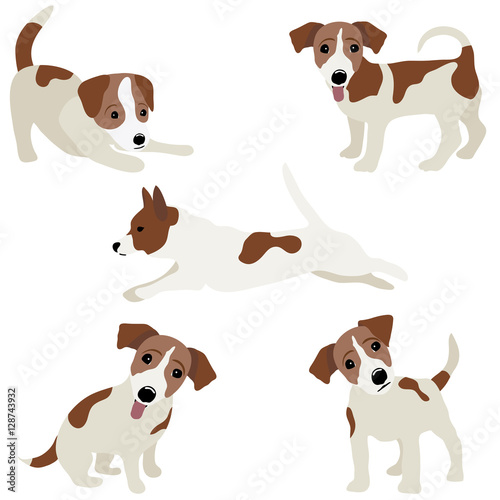 Fotografie, Obraz  Jack Russell Terrier. Vector Illustration of a dog
