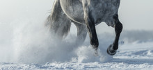 Legs Of Horse Close Up In Snow