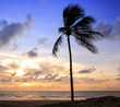 sunset at the beach with dramatic sky and coconut tree silhouetted