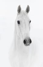 White Horse In High Key