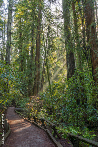 Photo Trail Thru the Redwood Forest at Armstrong Redwoods State Park