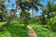 way on nature in Little Corn Island
