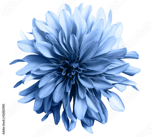 Cadres-photo bureau Fleuriste light blue flower on a white background isolated with clipping path. Closeup. big shaggy flower. for design. Dahlia.