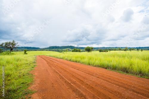 Tuinposter Zwavel geel meadow savanna landscape