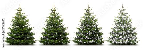 Fototapeta Weihnachtliche Silberne Tannenbäume obraz