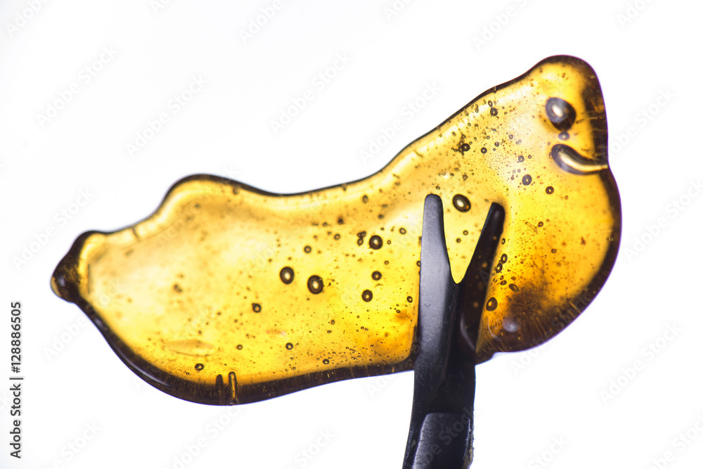 Fototapety, obrazy: Detail of cannabis oil concentrate aka shatter held on a tool is