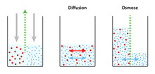 Osmose - Diffusion - Unterschied