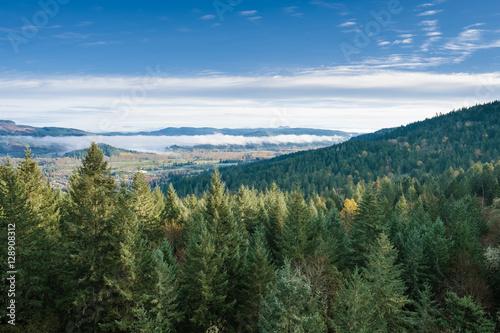 Fotografie, Obraz  Thurston Hills Natural Area Scenic Landscape