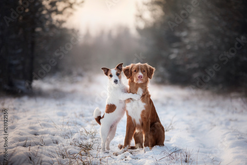 Fotobehang Hond two dogs winter mood, friendship and love