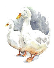 Goose Geese Walking Farm Animals Pets Watercolor Painting Illustration Isolated On White Background
