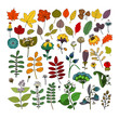 Set of decorative nature elements