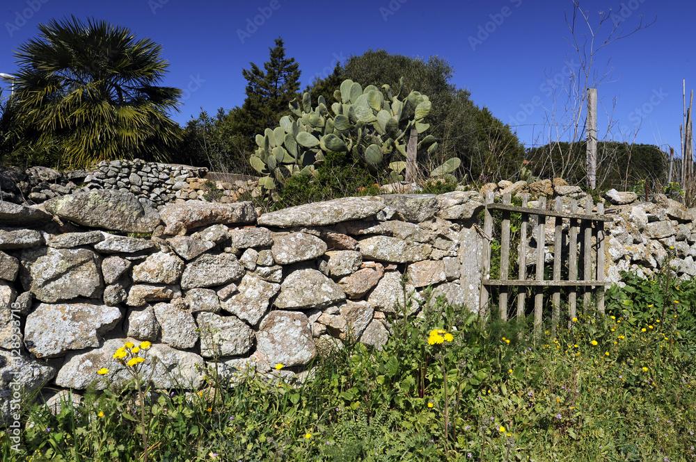 Verwilderter Garten Auf Sardinien Mit Legesteinmauer Foto Poster