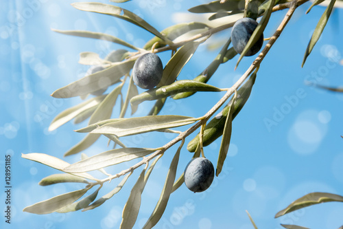 Tuinposter Olijfboom close up shot of an olive tree