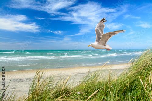 Foto auf AluDibond Nordsee Strand am Meer