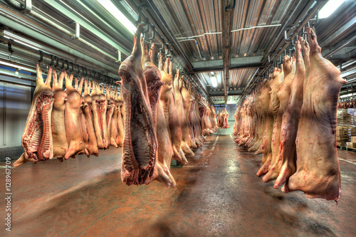 Photo pork carcasses hanging on hooks in a cold store