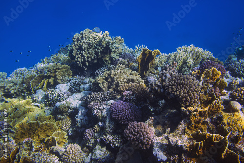 Fotobehang Koraalriffen Sunlit coral reef in the Red Sea, Egypt