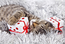 Christmas Cat With A Christmas...