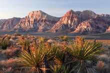 Morning At Red Rocks