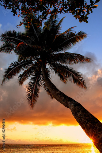 leaning palm tree at sunrise in lavena village on taveuni island