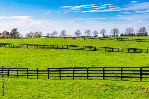 Fotografie, Obraz  Green pastures of horse farms. Country spring landscape.