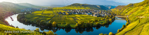 Photo Stands Vineyard Mosel