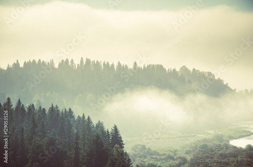 Poster Morning with fog thick morning mist in coniferous forest. coniferous trees, thickets of green forest.