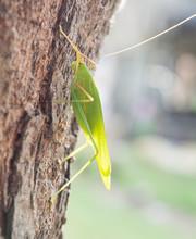 Green Bug On A Tree