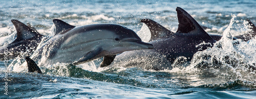 Stickers pour portes Dauphin Dolphins, swimming in the ocean