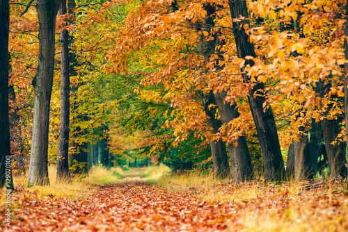 Path covered with leaves in autumn forest. Poster