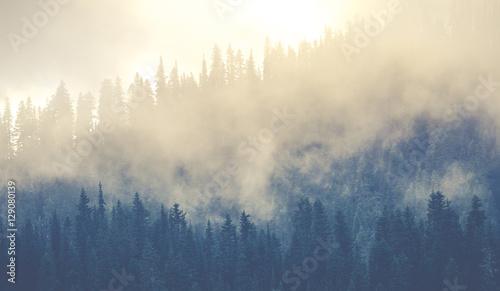 piękne lasy górskie pokrywające się dużą ilością mgły.