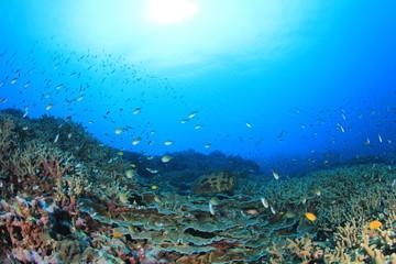 Fototapeta na wymiar Fish in ocean on underwater coral reef
