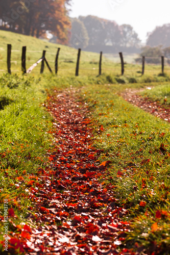 Early morning hike through autumn leaves Fototapeta