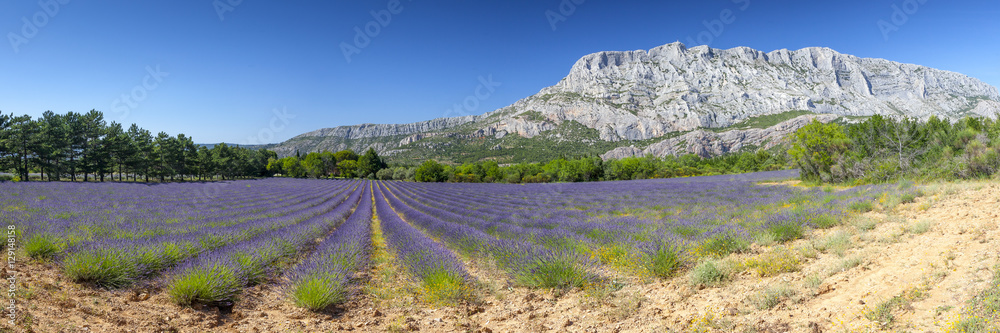 Fototapety, obrazy: Mount sainte Victoire and lavender