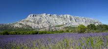 Mount Sainte Victoire And Lave...