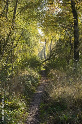Fototapeta Verwilderter Waldweg im Herbst obraz na płótnie